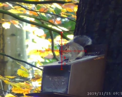 Pard NV008 LRF Squirrel Hunting-3